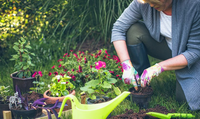 Health Benefits of Gardening for Over 50's